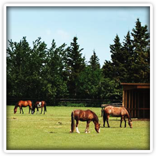 horseshoe stables Biking & Horseback Riding