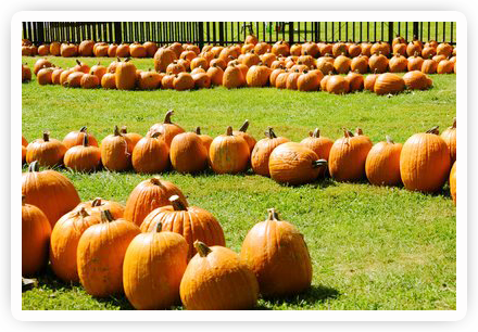 PumpkinPatch Pumpkin Harvest Festival   October 5 6, 2013