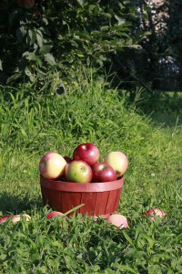 basket of apples small